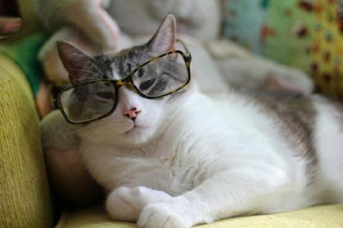 süße schicke katzen seriös mit leoparden muster brille