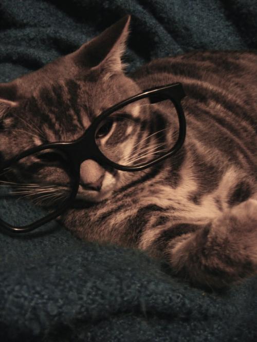 süße katzen vintage brille
