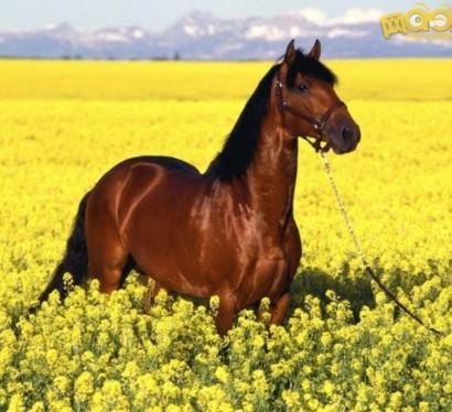 13 sch ne pferde in der wilden natur f r die tierliebhaber - Schone badfliesen ...