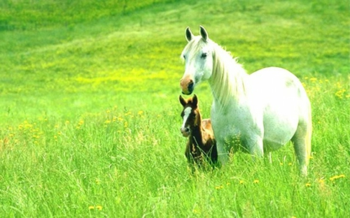 13 sch246ne pferde in der wilden natur f252r die tierliebhaber