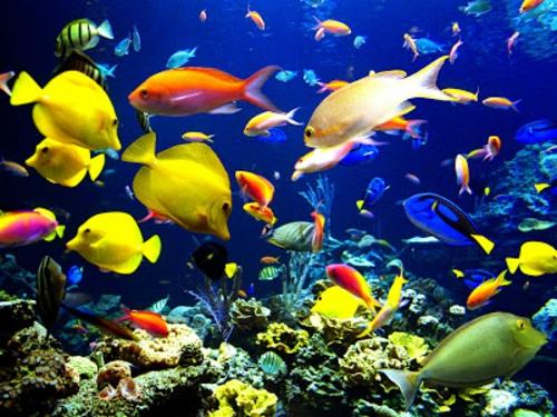 schöne tierbilder bunte fische