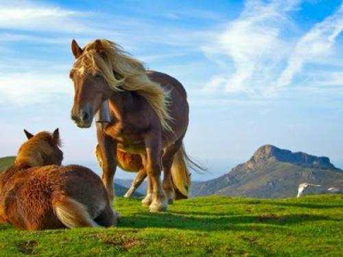 schöne süße tierbilder ein pferdenpaar