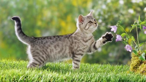 schöne süße tierbilder katze im garten
