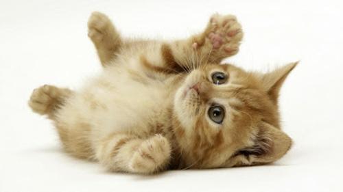schöne tierbilder verspielte katze