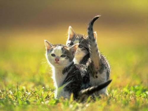 schöne süße tierbilder zwei süße katzen
