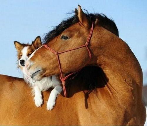 Tierfotos über die Freundschaft - 30 süße Anlässe zum Lächeln