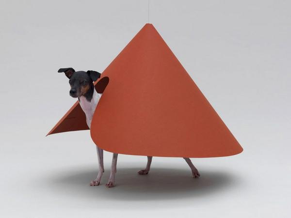 Architektur für Hunde originell ausgedacht orange oberfläche