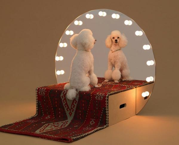 Hunde originell bühne spiegel Architektur