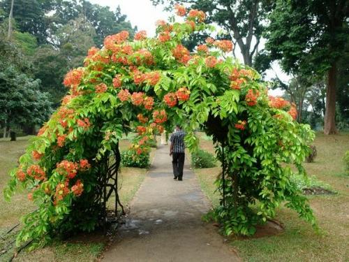 Coole gartengestaltung mit rosenbogen blickpunkt im garten for Gartengestaltung mit pflanzen