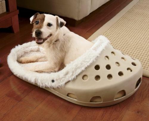 Cooles Hundebett in Form von einem Schuh crocs