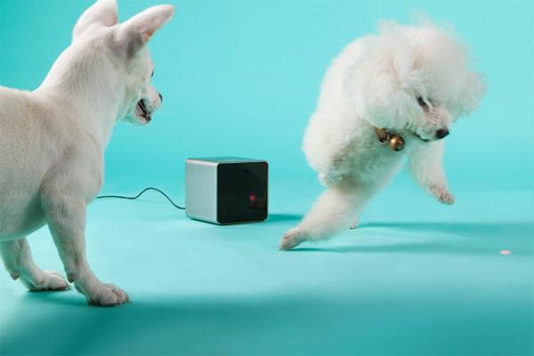 Haustier per Ihrem Smartphone hund katze petcube handy