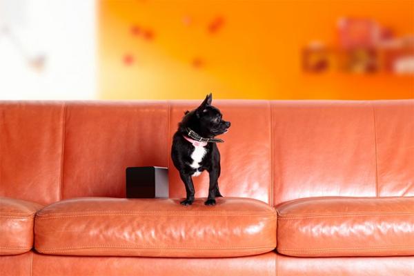 Haustier per Ihrem Smartphone hund sofa leder idee