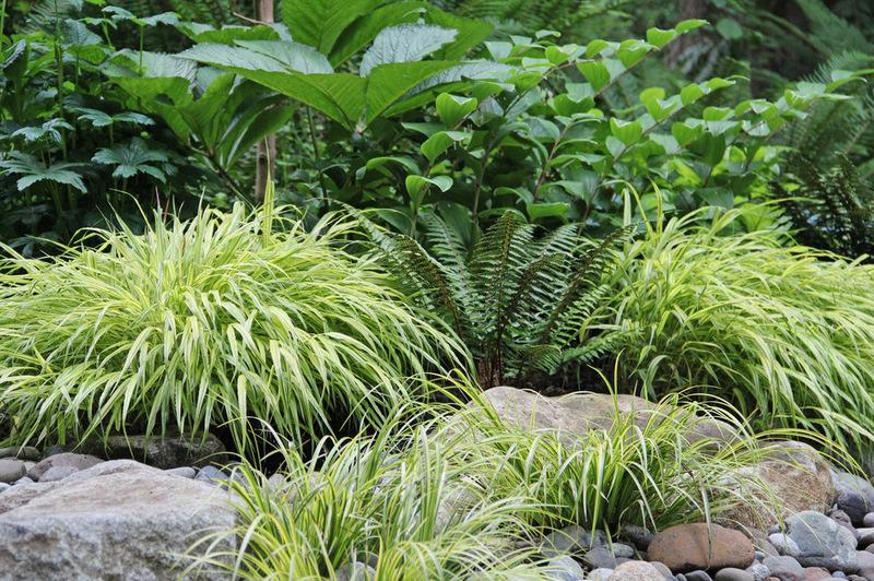 Lösungen für feuchte Erde hof garten gestaltung pflanzenarten