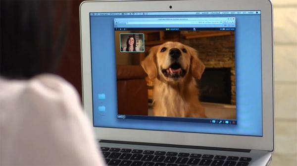 PetChatz Webcam und Futterautomat haustier checken computer online
