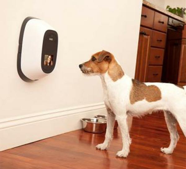 PetChatz Webcam und Futterautomat haustier  checken gadgets hund