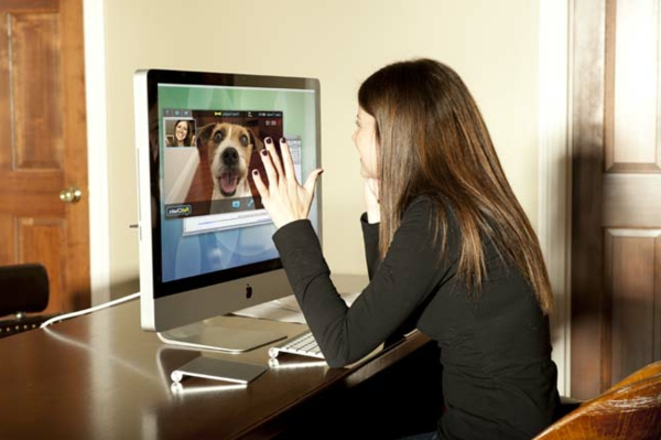 PetChatz Webcam und Futterautomat haustier checken hund laptop