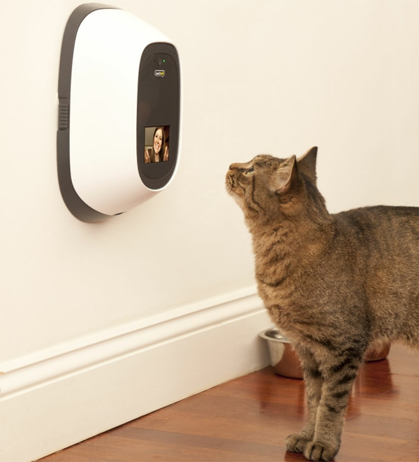 PetChatz Webcam und Futterautomat haustier checken design wand