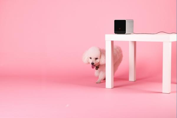 Petcube tierspiel rosa mädchen handy gerät gadgets kasten