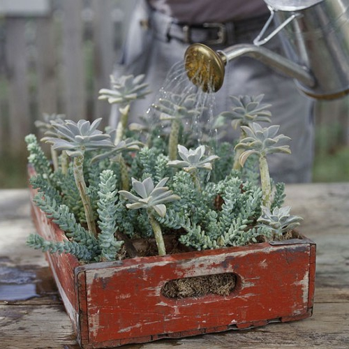 coole Vintage Blumentöpfe originell look holz kasten