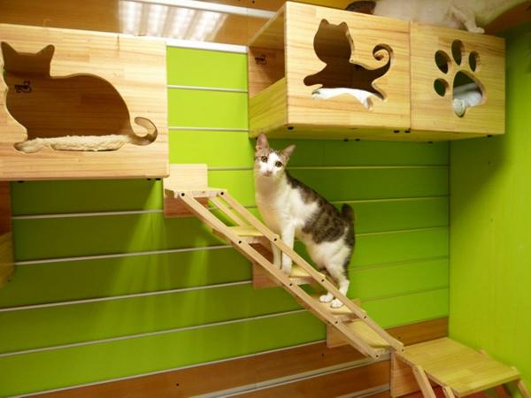 modulare katzenkletterwand von catswall. Black Bedroom Furniture Sets. Home Design Ideas