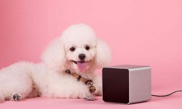 petcube haustier hund gerät gadgets handy originell