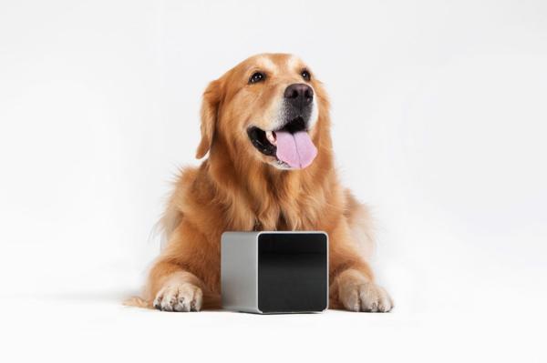 petcube haustier spiele geräte kästchen smartphone hund