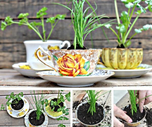 Teetassen neu verwenden 30 originelle bastelideen f r sie for Originelle zimmerpflanzen