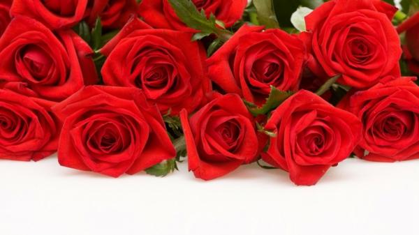 valentinstag rote rosen