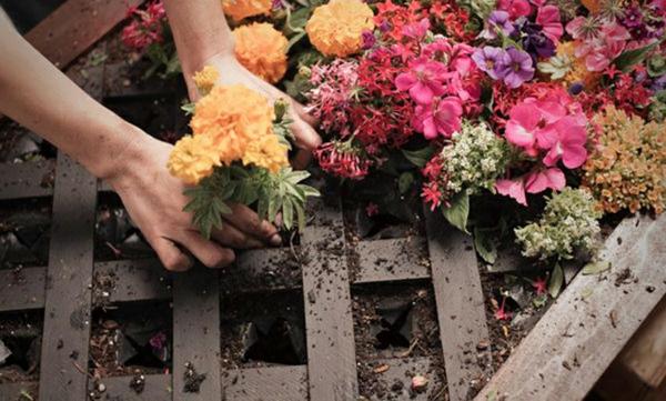 wand begrünung aus paletten blumen einpflanzen