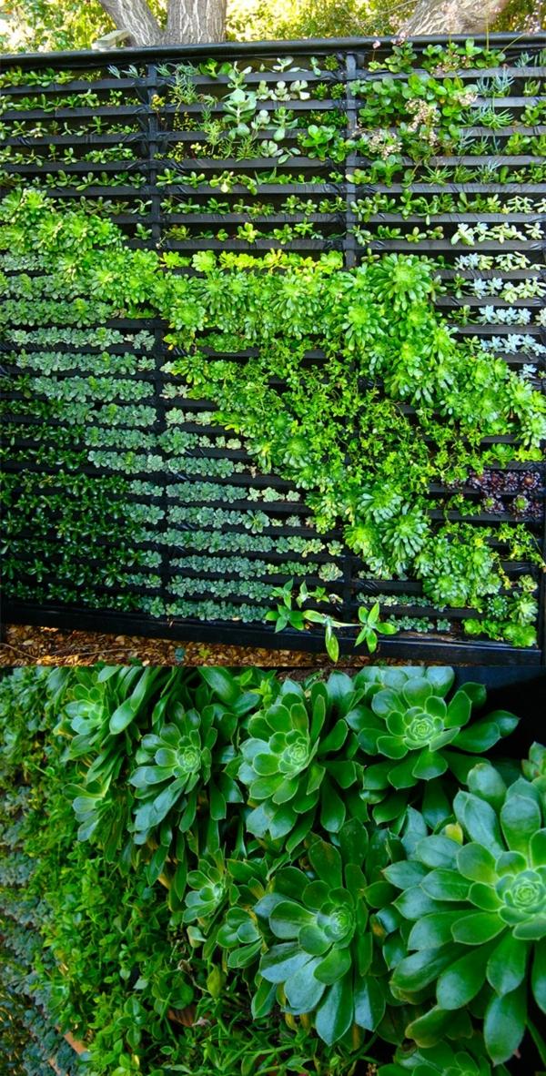 wandbegrünung aus zaun mit sukkulenten