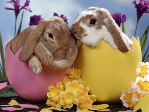 Die sage vom Osterhasen eierschalen