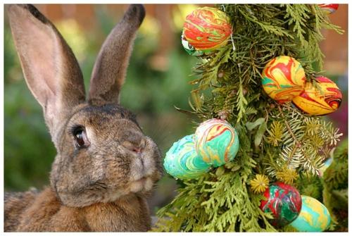 Die sage vom Osterhasen kaninchen