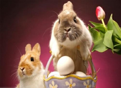 Die erzählung vom Osterhasen tulpen