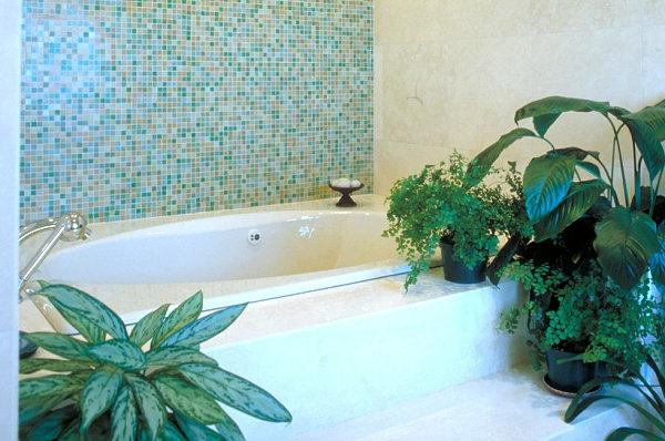Pflanzen im Badezimmer badewanne blumentopf