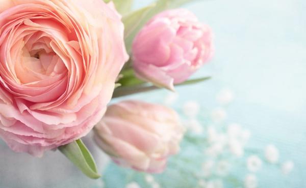 Romantische Deko zum Valentinstag blumen rosen rosa