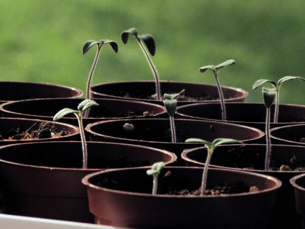 gartengestaltung töpfe kleine pflanzen