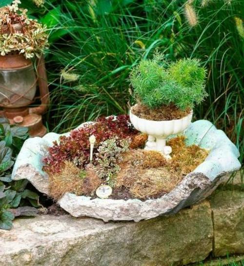 mini garten kriechende pflanzen moos