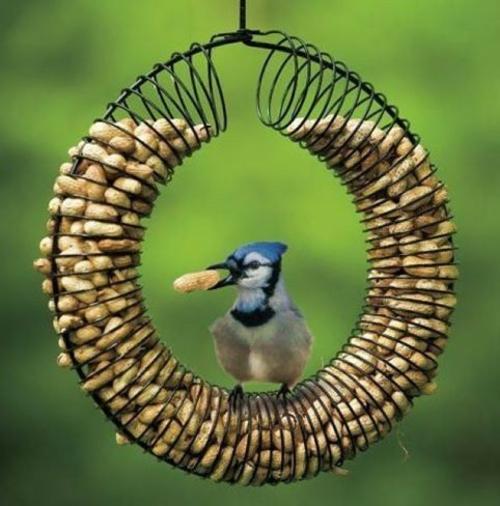 vogelfutterhaus selber bauen futterröhre