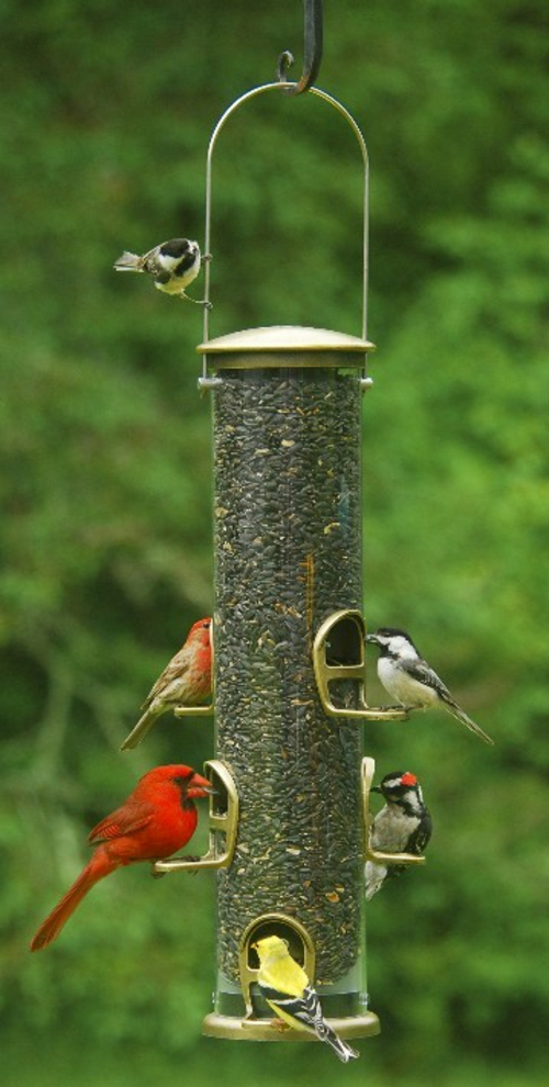 vogel futterhaus selber bauen plastikröhre