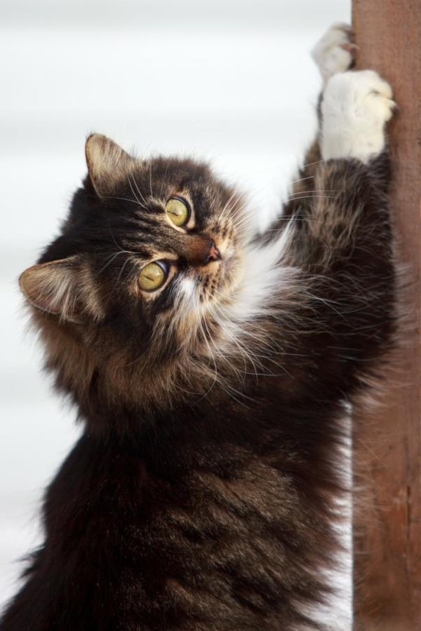 Bodenbelag  Massivholz haustiere süße niedliche katze