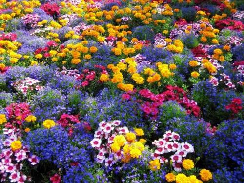 Bunte Gartengestaltung und Gartendeko pracht blumen