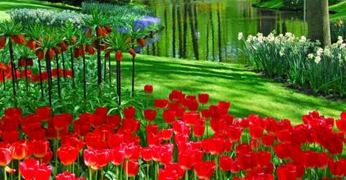 Bunte Gartengestaltung  Gartendeko rote tulpen leuchtend