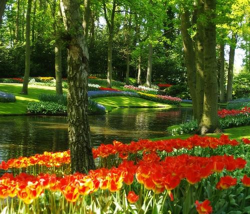 Bunte Gartengestaltung und Gartendeko rote tulpen pfad