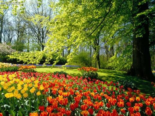 Bunte Gartengestaltung und Gartendeko rote tulpen