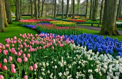 Bunte Gartengestaltung und Gartendeko tulpen frühling beet