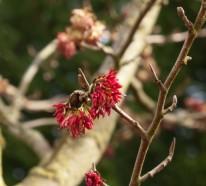 Gartengestaltung im Winter – 6 Blumen für großartige Farben