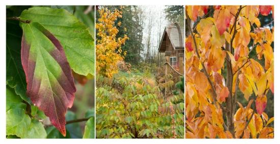 Gartengestaltung im winter herbstblätter