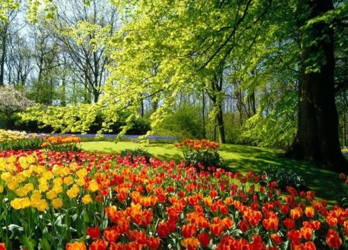 Garten elegant arrangiert gartengestaltung tulpenbeet