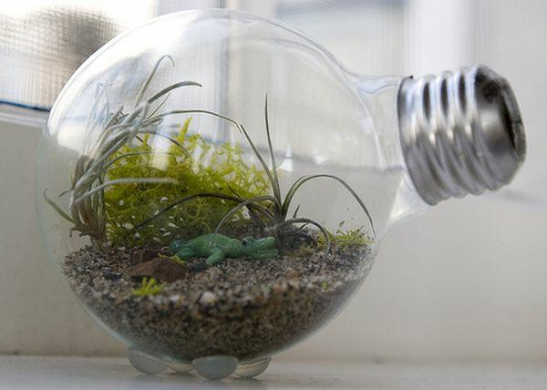 dekoideen glühbirnen terrarium