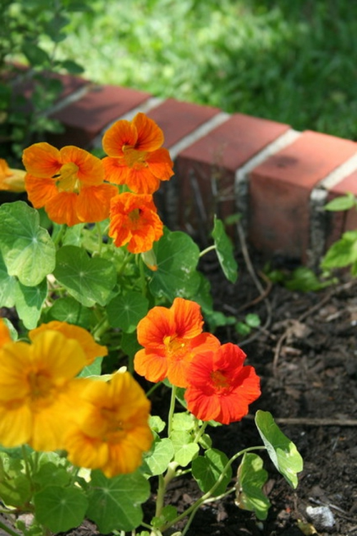 erfolgreiche Gartengestaltung blumenarten garten pflanzen blumenbeet